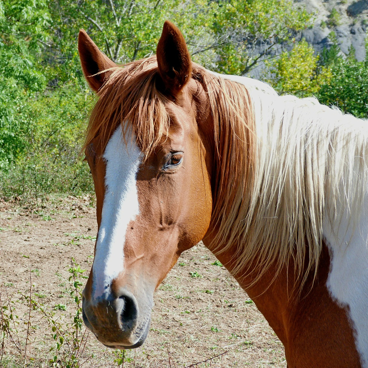Paard Paardenhoofd Paardenhaar