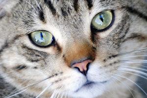 kat poes katten poezen dierenkliniek