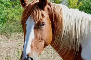 paard dapmarum dap marum