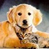 Hond Kat Huisdier Huisdieren