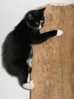 Kat klimmen klimpaal krabpaal