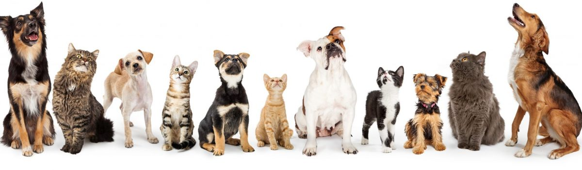 Row,Of,Cats,And,Dogs,Sitting,Looking,Up,Into,Blank
